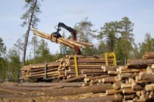 Українські лісгоспи можуть об'єднати в одну компанію