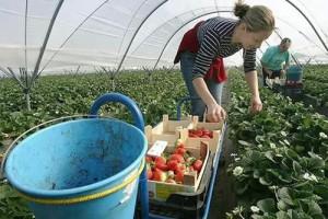 В Польше живут и работают почти миллион украинцев