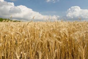Украина наращивает инвестиции в аграрный сектор