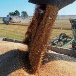 Украина исчерпала квоты на беспошлинные поставки пшеницы в ЕС