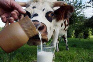 Европа не прочь употреблять украинское молоко