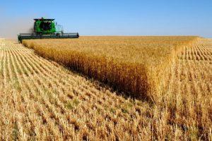 Активы агрохолдинга «Мрия» завысили в пять раз