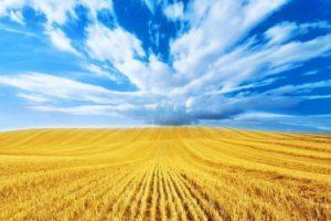 Украина и ФАО подписали соглашение о сотрудничестве