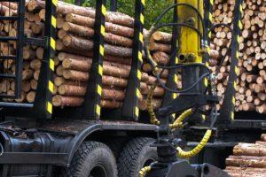 Через одесские порты хотели вывезти контрабандный лес на миллион