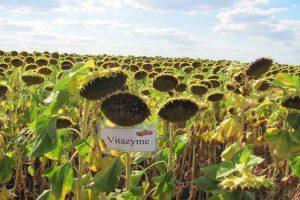 Поверит ли в биологическое удобрение Украина?