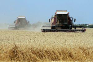 Индия стала крупнейшим импортером украинской аграрной продукции