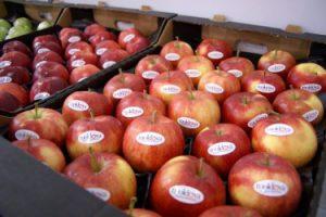 Украина может остаться без молдавских овощей и фруктов