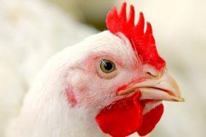 ЕС разрешил ввозить мясо птицы, улитки и молочную продукцию