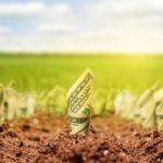Либерализация рынка земли: что обещают украинские политики?