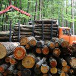 В Украине усилят контроль за заготовкой и реализацией древесины