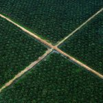 В Украине запретили использование пальмового масла