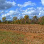 После отмены моратория цена земли в Украине вырастет многократно - ВБ