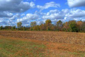 После отмены моратория цена земли в Украине вырастет многократно — ВБ
