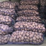 Украина впервые закупила картофель во Франции