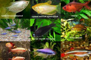 Совместимость аквариумных рыбок: рекомендации и советы